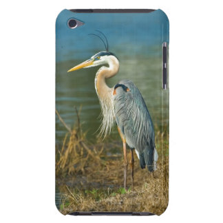 Great Blue Heron at the Pond iPod Touch Case