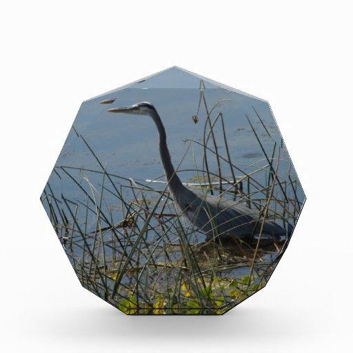 Great Blue Heron at Viera Wetlands Award