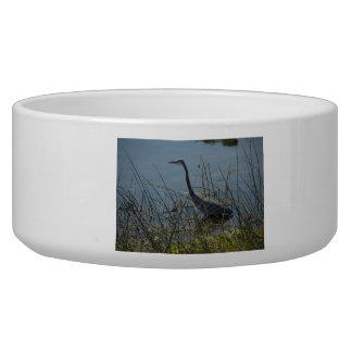 Great Blue Heron at Viera Wetlands Pet Bowl