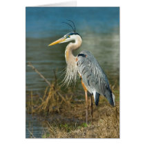 Great Blue Heron Bird at the Pond