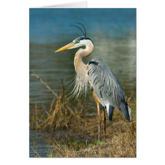 Great Blue Heron Bird at the Pond Greeting Card