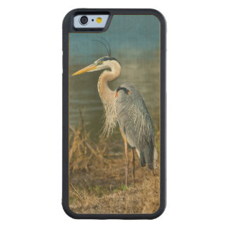 Great Blue Heron Bird at the Pond Carved Maple iPhone 6 Bumper Case