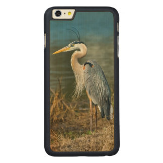 Great Blue Heron Bird at the Pond Carved Maple iPhone 6 Plus Slim Case