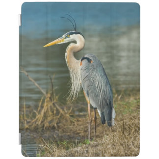 Great Blue Heron Bird iPad Smart Cover