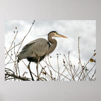 Great Blue Heron Birds Wildlife Animals Poster