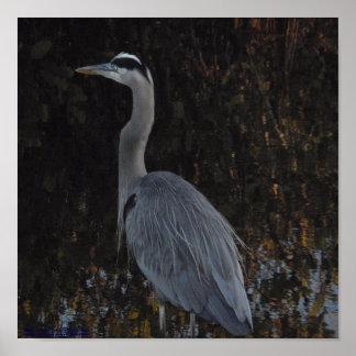 Great Blue Heron, Blackpoint Wildlife Refuge Poster