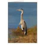 Great Blue Heron Blank Note or Greeting Card