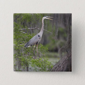 Great Blue Heron calling form cypress tree Button