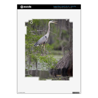 Great Blue Heron calling form cypress tree Decals For iPad 3