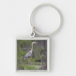 Great Blue Heron calling form cypress tree Keychain
