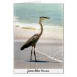 Great Blue Heron Cards