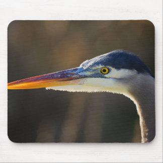 Great Blue Heron, close up portrait Mouse Pad