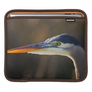 Great Blue Heron, close up portrait Sleeve For iPads
