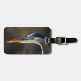 Great Blue Heron, close up portrait Tag For Luggage