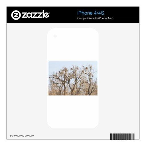 Great_Blue_Heron_Colony.jpg Skin Para El iPhone 4