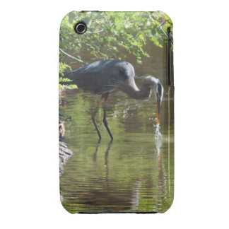 Great Blue Heron Drinking  iPhone 3 case
