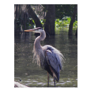 Great Blue Heron Fishing for Lunch Post Card