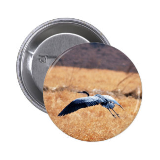 Great blue heron flying Low Pinback Buttons