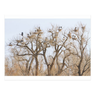 Great Blue Heron Hangout Postcard
