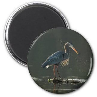 Great Blue heron in evening light Refrigerator Magnets