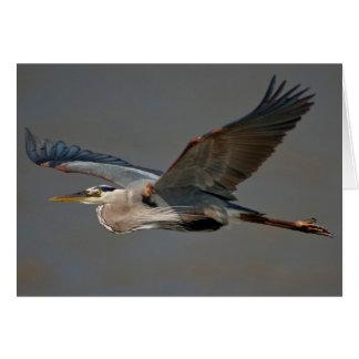 Great Blue Heron In Flight - (Ardea herodias) Card