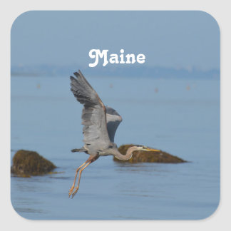 Great Blue Heron in Maine Square Sticker