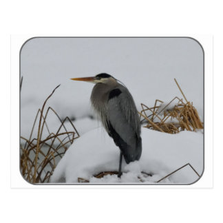 Great Blue Heron in the snow Postcard