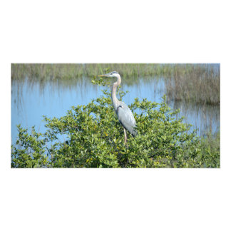 Great Blue Heron in the wild photocard Card