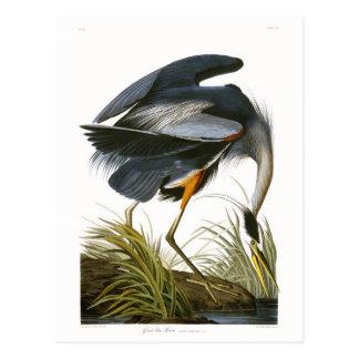 Great Blue Heron John James Audubon Post Cards
