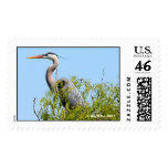 Great Blue Heron,  Kay Miller 2007 Stamp