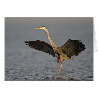 Great Blue Heron Landing Note Card