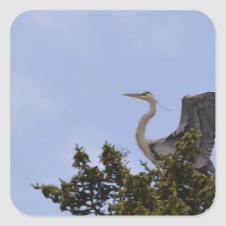Great Blue Heron Landing on Nest Square Sticker