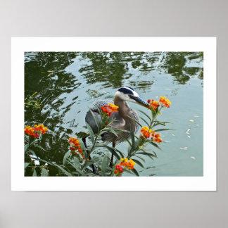 Great Blue Heron & Lantana Poster