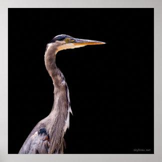 Great Blue Heron - Low Key Poster