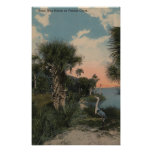 Great Blue Heron on Florida Coast Beach Poster