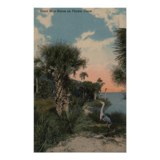 Great Blue Heron on Florida Coast Beach Poster