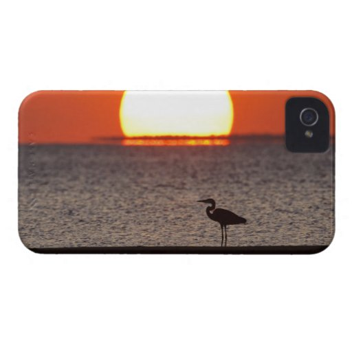 Great Blue Heron standing by Laguna Madre Case-Mate Blackberry Case