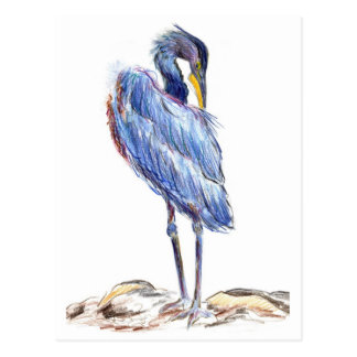 Great Blue Heron Tidies Feather - Watercolor Penci Postcard