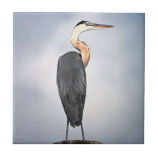 Great Blue Heron Tile