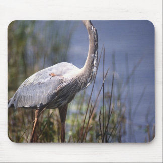 Great Blue Heron water bird found throughout Mouse Pad