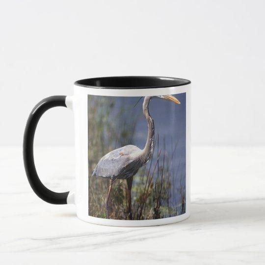 Great Blue Heron water bird found throughout Mug
