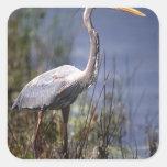 Great Blue Heron water bird found throughout Square Sticker