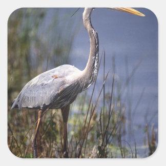 Great Blue Heron water bird found throughout Stickers