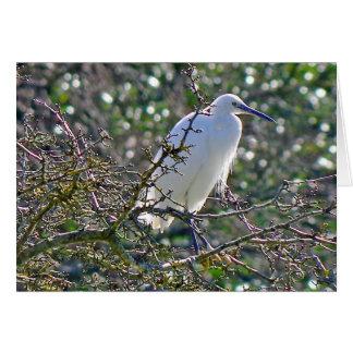 Great Blue Heron – white morph Card