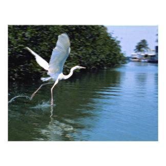 Great blue heron (white phase), Key Largo, Florida Flyers
