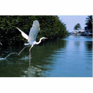 Great blue heron (white phase), Key Largo, Florida Photo Sculptures