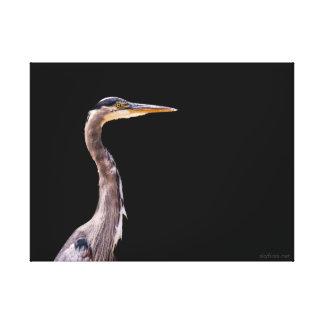 Great Blue Heron Wildlife Photo On Black Canvas Print