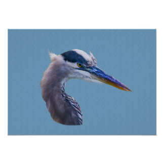 Great Blue Heron with Angry Eyes Poster