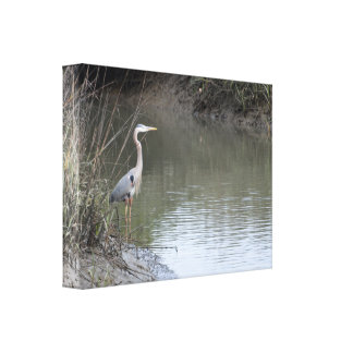 Great Blue Heron wrapped Canvas Print
