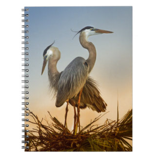 Great Blue Herons at Sunrise Spiral Notebooks
